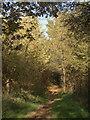 SS8677 : A footpath through trees at Merthyr Mawr Warren (2) by eswales