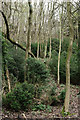 TQ3553 : Trees on the North Downs by Peter Trimming