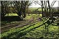 SX8257 : Track to field, Ash Meadow by Derek Harper