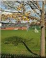 SX9065 : Tree, Torquay Academy by Derek Harper