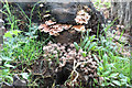 SP9314 : Fungi growing on rotting wood at College Lake by Chris Reynolds