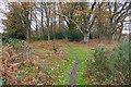 SU9554 : Bullswater Common by Alan Hunt