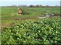 TL3973 : Fenland ditch and farmland track by Richard Humphrey