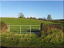 H7447 : Derrygooly Townland by Kenneth  Allen