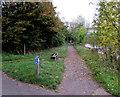 SU9577 : River Thames path fork near Eton by Jaggery