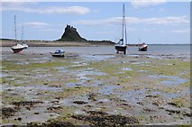 NU1341 : View to Lindisfarne Castle by Philip Halling