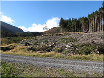 J3630 : Cut over section of Donard Wood by Eric Jones