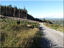 J3630 : Forest road in Donard Wood by Eric Jones