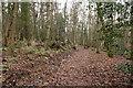 NS3518 : Woodland Wynd by Billy McCrorie