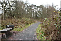 NS3618 : Seat on the Evergreen Way by Billy McCrorie