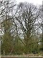 SE6065 : St John's Well Plantation, in December by Christine Johnstone