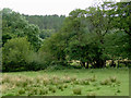 SJ9850 : Pasture and trees south-east of Cheddleton, Staffordshire by Roger  Kidd