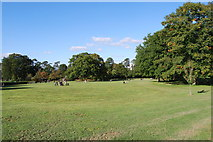TQ2636 : Goffs Park (6) by Barry Shimmon