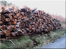 J3630 : Log pile in Donard Wood by Eric Jones