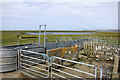 HU1756 : Sheepfold at Huxter by Des Blenkinsopp