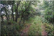SP3826 : Green Lane by Bill Boaden