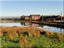 SD7908 : Flooded Field near Warth by David Dixon