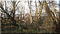 TG4010 : Train passing Damgate Wood by Evelyn Simak