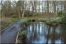 NS2209 : Pond at Carse Walk by Billy McCrorie