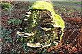 NS2209 : Fungi, Culzean Country Park by Billy McCrorie