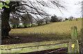 ST2098 : Ebbw Valley Walk above Treowen by M J Roscoe