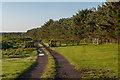 NU1337 : Track alongside Piers Wood by Ian Capper