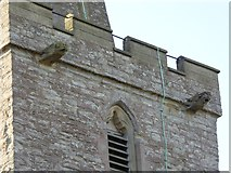 SO7937 : Gargoyles on the spire of St Gregory's, Castlemorton by David Smith