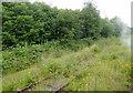 SJ9853 : Disused railway line at Leekbrook, Staffordshire by Roger  Kidd