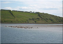 G9174 : Seals basking on a sand bar near Rossilly by Rod Allday