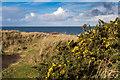 SW5740 : Gwithian Towans coastal dunes by David P Howard