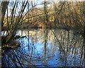 SU4368 : Pond in Brick Kiln Wood by Des Blenkinsopp