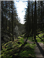 SD3494 : Walk in the Grizedale Forest by Paul Jewell