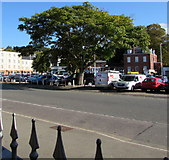 SX9193 : Isambard Parade tree, Exeter by Jaggery