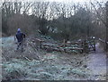SO2601 : Renovating dead hedge, Branches Fork Meadows Nature Reserve by M J Roscoe
