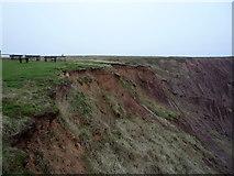 TA1281 : Coastal erosion, Carr Naze by JThomas