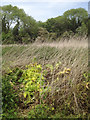 SP2965 : Giant Hogweed meets its end in Brindley's field, southeast Warwick by Robin Stott