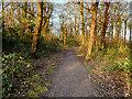 SJ5198 : Path in Clinkham Wood by David Dixon