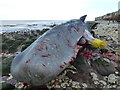 TF6741 : Dead sperm whale, Hunstanton - 13 by Richard Humphrey