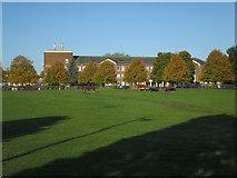 TL4259 : Horses by the vet school by Hugh Venables