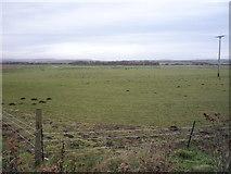 TA0779 : Grazing off Flotmanby Lane (A1039) by JThomas