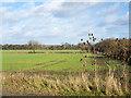 NZ2727 : Field edge adjacent to Middridge Road by Trevor Littlewood