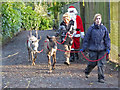 SX5858 : Dartmoor Zoological Park - Santa's reindeer by Chris Allen