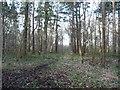 SE5533 : Path heading south-west, Bishop Wood by Christine Johnstone
