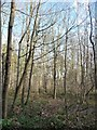 SE5633 : Deciduous woodland, Bishop Wood by Christine Johnstone
