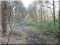 SE5633 : Path heading south-west, Bishop Wood by Christine Johnstone