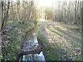 SE5633 : Main Drain, Bishop Wood, looking upstream by Christine Johnstone