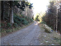 J3629 : View north-northwest along the forest road leading from Craignagore Bridge by Eric Jones