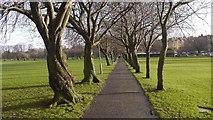 NT2572 : Coronation Walk, The Meadows by Richard Webb