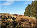 NZ0540 : Plantation beside dry stone wall by Trevor Littlewood