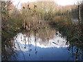 SK0093 : Gamesley Woodlands (wildlife pond) by Stephen Burton